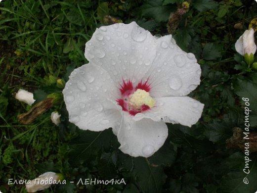 Приветствую, дорогие друзья! Еще хотелось бы поделиться этой цветочной красотой Прикарпатья. с. Шешоры фото 18