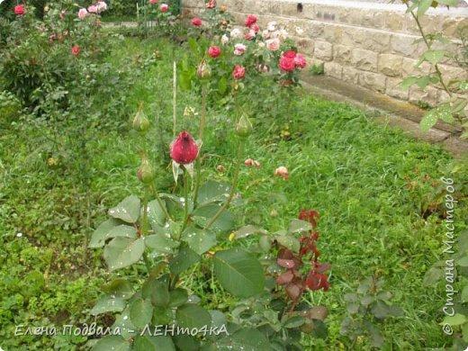 Приветствую, дорогие друзья! Еще хотелось бы поделиться этой цветочной красотой Прикарпатья. с. Шешоры фото 19