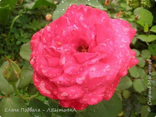 Приветствую, дорогие друзья! Еще хотелось бы поделиться этой цветочной красотой Прикарпатья. с. Шешоры фото 16