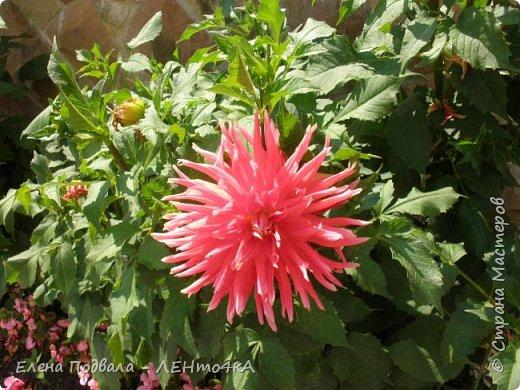 Приветствую, дорогие друзья! Еще хотелось бы поделиться этой цветочной красотой Прикарпатья. с. Шешоры фото 23
