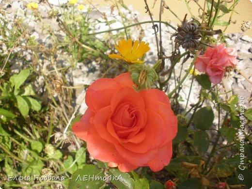 Приветствую, дорогие друзья! Еще хотелось бы поделиться этой цветочной красотой Прикарпатья. с. Шешоры фото 22