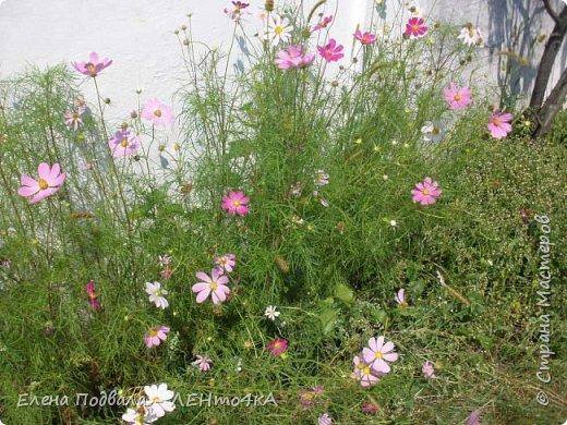 Приветствую, дорогие друзья! Еще хотелось бы поделиться этой цветочной красотой Прикарпатья. с. Шешоры фото 2
