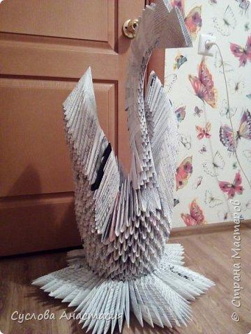 Огромная и прекрасная почти Белая лебедь фото 3