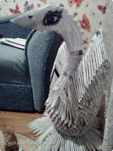 Огромная и прекрасная почти Белая лебедь фото 1