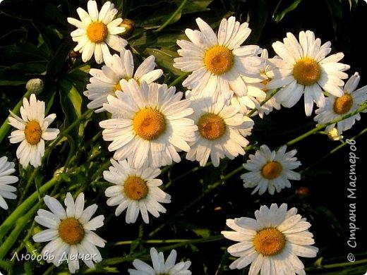 Всем доброго времени суток! За окнами прекрасный солнечный день, но чувствуется приближение осени. А это значит, что скоро завершение дачного сезона. Поездки на дачу сократились до выходных дней, а это значит, что можно вернуться к общению в Стране мастеров.Приветствую всех, кто заходит на мою страничку и желаю доброго, яркого дня. Лето в этом году пришло с запозданием, поэтому весной появилась возможность отвлечься в саду от земляных работ и заняться украшением сада. Такой столик на нашей даче появился давно, но все не хватало времени его приукрасить. Столешница покупная закреплена на спиленной яблоне. Теперь это столик для чайных церемоний. фото 24