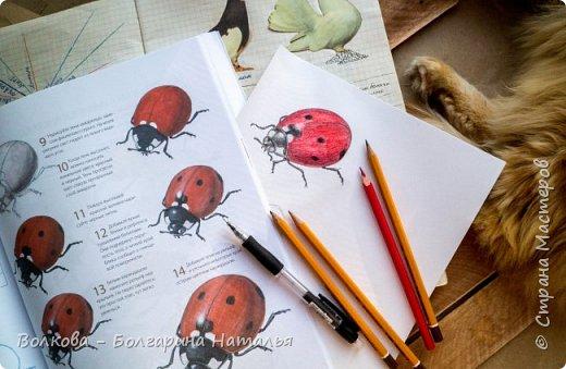 """Книга Джона Лоуза """"Дневник художника-натуралиста. Как рисовать животных, птиц, растения и пейзажи"""" (М.: МИФ, 2018) хороша не только тем, что автор даёт рекомендации по зарисовкам и оформлению (зарисовок) птиц, животных, насекомых, пейзажей. Очень много внимания уделено методам исследования интересующего объекта.  Читая, а скорее листая этот путеводитель по миру натуралистов, возникал вопрос: а зачем так заморачиваться, когда существуют фотоаппараты, диктофоны и энциклопедии? Конечно, с помощью техники наблюдать и фиксировать увиденное проще в разы, но наверняка интереснее делать это дедовским методом. И, опять же, это будут уже твои личные наблюдения и ты точно своими глазами/ушами увидишь/услышишь что-то новое.  Очень мне понравился способ зарисовывать/записывать песни птиц. Оказывается это так забавно и просто. Можно, и даже нужно, накладывать слова на птичью музыку. По этому поводу вспомнился случай из детства, когда прабабушка напевала мелодию, которую тринькали птицы, сидя на проводах. Самое смешное, что я тогда удивлялась, как так птицы могут петь """"сИрИда, пятница, между ними чИЧверИГ"""":)))) Не сразу дошло до меня, что это был экспромт бабушки наложить слова на мелодию:)  Кроме того, в книге очень много советов по материалам и техникам рисования.  Заманчивые пошаговые инструкции по рисованию разной живности не оставят вас равнодушным, руки так и будут тянуться попробовать что-нибудь зарисовать. Я попробовала изобразить божью коровку цветными карандашами, хотя в книге приведён пример на красках. Хотя тут кому что нравится. Мне больше нравится карандаши. фото 12"""