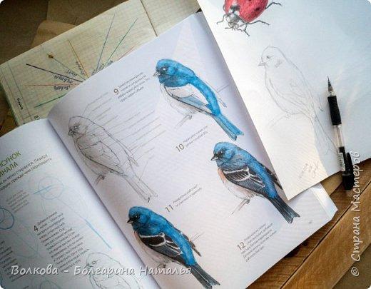 """Книга Джона Лоуза """"Дневник художника-натуралиста. Как рисовать животных, птиц, растения и пейзажи"""" (М.: МИФ, 2018) хороша не только тем, что автор даёт рекомендации по зарисовкам и оформлению (зарисовок) птиц, животных, насекомых, пейзажей. Очень много внимания уделено методам исследования интересующего объекта.  Читая, а скорее листая этот путеводитель по миру натуралистов, возникал вопрос: а зачем так заморачиваться, когда существуют фотоаппараты, диктофоны и энциклопедии? Конечно, с помощью техники наблюдать и фиксировать увиденное проще в разы, но наверняка интереснее делать это дедовским методом. И, опять же, это будут уже твои личные наблюдения и ты точно своими глазами/ушами увидишь/услышишь что-то новое.  Очень мне понравился способ зарисовывать/записывать песни птиц. Оказывается это так забавно и просто. Можно, и даже нужно, накладывать слова на птичью музыку. По этому поводу вспомнился случай из детства, когда прабабушка напевала мелодию, которую тринькали птицы, сидя на проводах. Самое смешное, что я тогда удивлялась, как так птицы могут петь """"сИрИда, пятница, между ними чИЧверИГ"""":)))) Не сразу дошло до меня, что это был экспромт бабушки наложить слова на мелодию:)  Кроме того, в книге очень много советов по материалам и техникам рисования.  Заманчивые пошаговые инструкции по рисованию разной живности не оставят вас равнодушным, руки так и будут тянуться попробовать что-нибудь зарисовать. Я попробовала изобразить божью коровку цветными карандашами, хотя в книге приведён пример на красках. Хотя тут кому что нравится. Мне больше нравится карандаши. фото 16"""