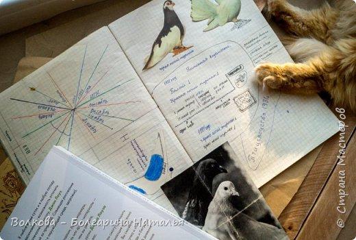 """Книга Джона Лоуза """"Дневник художника-натуралиста. Как рисовать животных, птиц, растения и пейзажи"""" (М.: МИФ, 2018) хороша не только тем, что автор даёт рекомендации по зарисовкам и оформлению (зарисовок) птиц, животных, насекомых, пейзажей. Очень много внимания уделено методам исследования интересующего объекта.  Читая, а скорее листая этот путеводитель по миру натуралистов, возникал вопрос: а зачем так заморачиваться, когда существуют фотоаппараты, диктофоны и энциклопедии? Конечно, с помощью техники наблюдать и фиксировать увиденное проще в разы, но наверняка интереснее делать это дедовским методом. И, опять же, это будут уже твои личные наблюдения и ты точно своими глазами/ушами увидишь/услышишь что-то новое.  Очень мне понравился способ зарисовывать/записывать песни птиц. Оказывается это так забавно и просто. Можно, и даже нужно, накладывать слова на птичью музыку. По этому поводу вспомнился случай из детства, когда прабабушка напевала мелодию, которую тринькали птицы, сидя на проводах. Самое смешное, что я тогда удивлялась, как так птицы могут петь """"сИрИда, пятница, между ними чИЧверИГ"""":)))) Не сразу дошло до меня, что это был экспромт бабушки наложить слова на мелодию:)  Кроме того, в книге очень много советов по материалам и техникам рисования.  Заманчивые пошаговые инструкции по рисованию разной живности не оставят вас равнодушным, руки так и будут тянуться попробовать что-нибудь зарисовать. Я попробовала изобразить божью коровку цветными карандашами, хотя в книге приведён пример на красках. Хотя тут кому что нравится. Мне больше нравится карандаши. фото 21"""