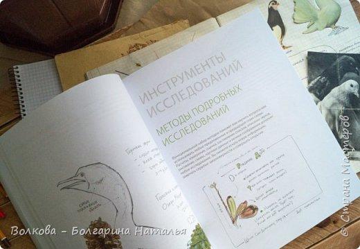 """Книга Джона Лоуза """"Дневник художника-натуралиста. Как рисовать животных, птиц, растения и пейзажи"""" (М.: МИФ, 2018) хороша не только тем, что автор даёт рекомендации по зарисовкам и оформлению (зарисовок) птиц, животных, насекомых, пейзажей. Очень много внимания уделено методам исследования интересующего объекта.  Читая, а скорее листая этот путеводитель по миру натуралистов, возникал вопрос: а зачем так заморачиваться, когда существуют фотоаппараты, диктофоны и энциклопедии? Конечно, с помощью техники наблюдать и фиксировать увиденное проще в разы, но наверняка интереснее делать это дедовским методом. И, опять же, это будут уже твои личные наблюдения и ты точно своими глазами/ушами увидишь/услышишь что-то новое.  Очень мне понравился способ зарисовывать/записывать песни птиц. Оказывается это так забавно и просто. Можно, и даже нужно, накладывать слова на птичью музыку. По этому поводу вспомнился случай из детства, когда прабабушка напевала мелодию, которую тринькали птицы, сидя на проводах. Самое смешное, что я тогда удивлялась, как так птицы могут петь """"сИрИда, пятница, между ними чИЧверИГ"""":)))) Не сразу дошло до меня, что это был экспромт бабушки наложить слова на мелодию:)  Кроме того, в книге очень много советов по материалам и техникам рисования.  Заманчивые пошаговые инструкции по рисованию разной живности не оставят вас равнодушным, руки так и будут тянуться попробовать что-нибудь зарисовать. Я попробовала изобразить божью коровку цветными карандашами, хотя в книге приведён пример на красках. Хотя тут кому что нравится. Мне больше нравится карандаши. фото 5"""