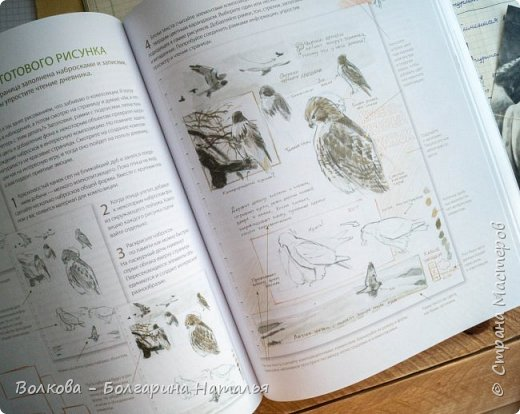 """Книга Джона Лоуза """"Дневник художника-натуралиста. Как рисовать животных, птиц, растения и пейзажи"""" (М.: МИФ, 2018) хороша не только тем, что автор даёт рекомендации по зарисовкам и оформлению (зарисовок) птиц, животных, насекомых, пейзажей. Очень много внимания уделено методам исследования интересующего объекта.  Читая, а скорее листая этот путеводитель по миру натуралистов, возникал вопрос: а зачем так заморачиваться, когда существуют фотоаппараты, диктофоны и энциклопедии? Конечно, с помощью техники наблюдать и фиксировать увиденное проще в разы, но наверняка интереснее делать это дедовским методом. И, опять же, это будут уже твои личные наблюдения и ты точно своими глазами/ушами увидишь/услышишь что-то новое.  Очень мне понравился способ зарисовывать/записывать песни птиц. Оказывается это так забавно и просто. Можно, и даже нужно, накладывать слова на птичью музыку. По этому поводу вспомнился случай из детства, когда прабабушка напевала мелодию, которую тринькали птицы, сидя на проводах. Самое смешное, что я тогда удивлялась, как так птицы могут петь """"сИрИда, пятница, между ними чИЧверИГ"""":)))) Не сразу дошло до меня, что это был экспромт бабушки наложить слова на мелодию:)  Кроме того, в книге очень много советов по материалам и техникам рисования.  Заманчивые пошаговые инструкции по рисованию разной живности не оставят вас равнодушным, руки так и будут тянуться попробовать что-нибудь зарисовать. Я попробовала изобразить божью коровку цветными карандашами, хотя в книге приведён пример на красках. Хотя тут кому что нравится. Мне больше нравится карандаши. фото 8"""
