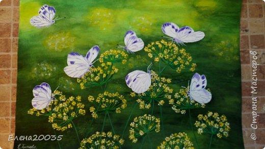 Бабочки .