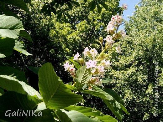Добрый день, друзья!  Вспоминаю чудесное лето этого года...  Много солнечных дней! Отличная погода! Красивая природа!  Начну с моих впечатлений от поездки в город Тверь. фото 12