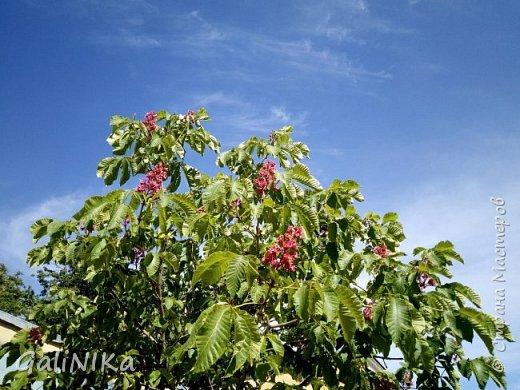 Добрый день, друзья!  Вспоминаю чудесное лето этого года...  Много солнечных дней! Отличная погода! Красивая природа!  Начну с моих впечатлений от поездки в город Тверь. фото 15