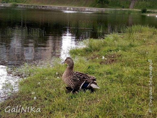 """Доброе утро, друзья! Продолжаю свой репортаж """"Картинки солнечного ЛЕТА"""". Лето этого года в Санкт-Петербурге было на удивление сказочно жаркое, солнечное!  В такую погоду хотелось  идти, бежать, ехать к речке, к озеру, к морю. До моря мне далеко, а вот озера рядом!  Тем более, что почти каждый день ласковое утреннее солнышко манило выйти из дома на улицу.  Расскажу о том, что меня удивило и восхитило ранним утром в июне. А затем последовали мои наблюдения ...       фото 2"""