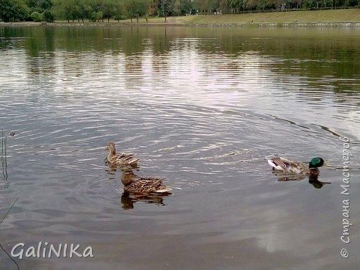"""Доброе утро, друзья! Продолжаю свой репортаж """"Картинки солнечного ЛЕТА"""". Лето этого года в Санкт-Петербурге было на удивление сказочно жаркое, солнечное!  В такую погоду хотелось  идти, бежать, ехать к речке, к озеру, к морю. До моря мне далеко, а вот озера рядом!  Тем более, что почти каждый день ласковое утреннее солнышко манило выйти из дома на улицу.  Расскажу о том, что меня удивило и восхитило ранним утром в июне. А затем последовали мои наблюдения ...       фото 5"""