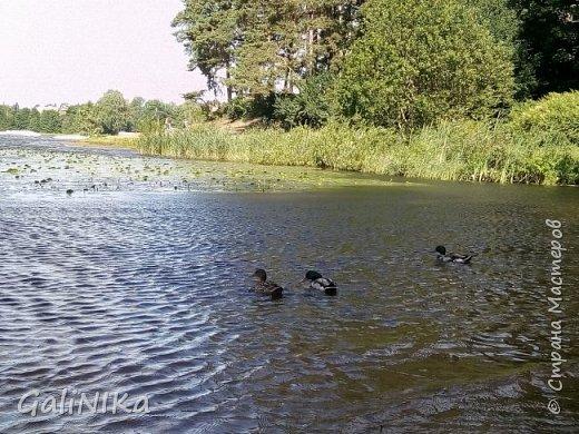 """Доброе утро, друзья! Продолжаю свой репортаж """"Картинки солнечного ЛЕТА"""". Лето этого года в Санкт-Петербурге было на удивление сказочно жаркое, солнечное!  В такую погоду хотелось  идти, бежать, ехать к речке, к озеру, к морю. До моря мне далеко, а вот озера рядом!  Тем более, что почти каждый день ласковое утреннее солнышко манило выйти из дома на улицу.  Расскажу о том, что меня удивило и восхитило ранним утром в июне. А затем последовали мои наблюдения ...       фото 18"""