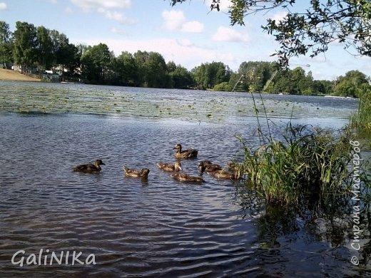 """Доброе утро, друзья! Продолжаю свой репортаж """"Картинки солнечного ЛЕТА"""". Лето этого года в Санкт-Петербурге было на удивление сказочно жаркое, солнечное!  В такую погоду хотелось  идти, бежать, ехать к речке, к озеру, к морю. До моря мне далеко, а вот озера рядом!  Тем более, что почти каждый день ласковое утреннее солнышко манило выйти из дома на улицу.  Расскажу о том, что меня удивило и восхитило ранним утром в июне. А затем последовали мои наблюдения ...       фото 20"""