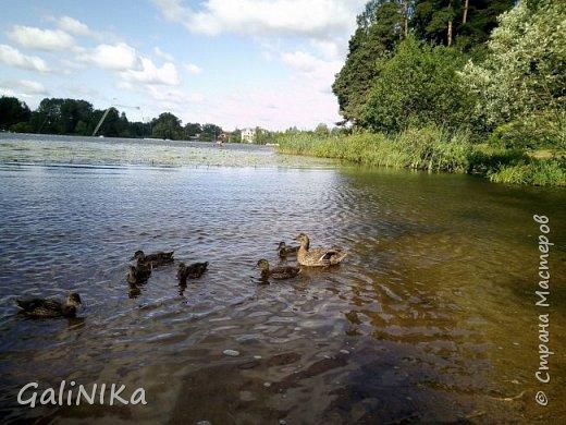 """Доброе утро, друзья! Продолжаю свой репортаж """"Картинки солнечного ЛЕТА"""". Лето этого года в Санкт-Петербурге было на удивление сказочно жаркое, солнечное!  В такую погоду хотелось  идти, бежать, ехать к речке, к озеру, к морю. До моря мне далеко, а вот озера рядом!  Тем более, что почти каждый день ласковое утреннее солнышко манило выйти из дома на улицу.  Расскажу о том, что меня удивило и восхитило ранним утром в июне. А затем последовали мои наблюдения ...       фото 24"""