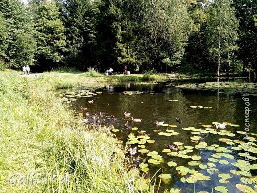 """Доброе утро, друзья! Продолжаю свой репортаж """"Картинки солнечного ЛЕТА"""". Лето этого года в Санкт-Петербурге было на удивление сказочно жаркое, солнечное!  В такую погоду хотелось  идти, бежать, ехать к речке, к озеру, к морю. До моря мне далеко, а вот озера рядом!  Тем более, что почти каждый день ласковое утреннее солнышко манило выйти из дома на улицу.  Расскажу о том, что меня удивило и восхитило ранним утром в июне. А затем последовали мои наблюдения ...       фото 30"""
