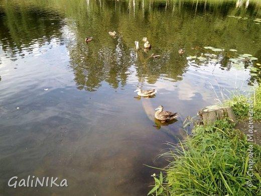 """Доброе утро, друзья! Продолжаю свой репортаж """"Картинки солнечного ЛЕТА"""". Лето этого года в Санкт-Петербурге было на удивление сказочно жаркое, солнечное!  В такую погоду хотелось  идти, бежать, ехать к речке, к озеру, к морю. До моря мне далеко, а вот озера рядом!  Тем более, что почти каждый день ласковое утреннее солнышко манило выйти из дома на улицу.  Расскажу о том, что меня удивило и восхитило ранним утром в июне. А затем последовали мои наблюдения ...       фото 31"""