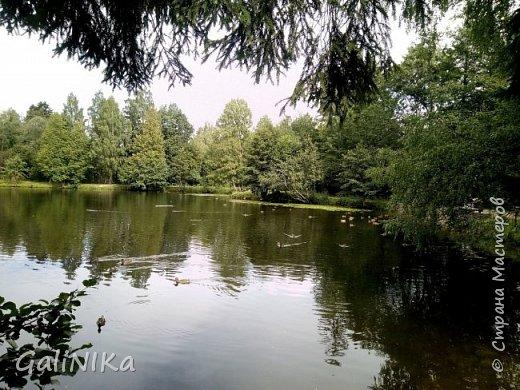 """Доброе утро, друзья! Продолжаю свой репортаж """"Картинки солнечного ЛЕТА"""". Лето этого года в Санкт-Петербурге было на удивление сказочно жаркое, солнечное!  В такую погоду хотелось  идти, бежать, ехать к речке, к озеру, к морю. До моря мне далеко, а вот озера рядом!  Тем более, что почти каждый день ласковое утреннее солнышко манило выйти из дома на улицу.  Расскажу о том, что меня удивило и восхитило ранним утром в июне. А затем последовали мои наблюдения ...       фото 32"""