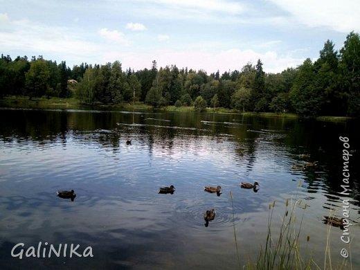 """Доброе утро, друзья! Продолжаю свой репортаж """"Картинки солнечного ЛЕТА"""". Лето этого года в Санкт-Петербурге было на удивление сказочно жаркое, солнечное!  В такую погоду хотелось  идти, бежать, ехать к речке, к озеру, к морю. До моря мне далеко, а вот озера рядом!  Тем более, что почти каждый день ласковое утреннее солнышко манило выйти из дома на улицу.  Расскажу о том, что меня удивило и восхитило ранним утром в июне. А затем последовали мои наблюдения ...       фото 34"""
