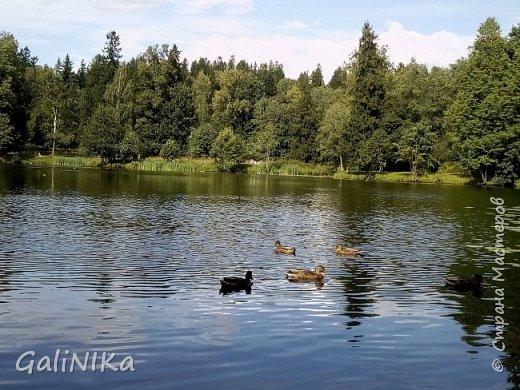"""Доброе утро, друзья! Продолжаю свой репортаж """"Картинки солнечного ЛЕТА"""". Лето этого года в Санкт-Петербурге было на удивление сказочно жаркое, солнечное!  В такую погоду хотелось  идти, бежать, ехать к речке, к озеру, к морю. До моря мне далеко, а вот озера рядом!  Тем более, что почти каждый день ласковое утреннее солнышко манило выйти из дома на улицу.  Расскажу о том, что меня удивило и восхитило ранним утром в июне. А затем последовали мои наблюдения ...       фото 36"""