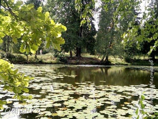 """Доброе утро, друзья! Продолжаю свой репортаж """"Картинки солнечного ЛЕТА"""". Лето этого года в Санкт-Петербурге было на удивление сказочно жаркое, солнечное!  В такую погоду хотелось  идти, бежать, ехать к речке, к озеру, к морю. До моря мне далеко, а вот озера рядом!  Тем более, что почти каждый день ласковое утреннее солнышко манило выйти из дома на улицу.  Расскажу о том, что меня удивило и восхитило ранним утром в июне. А затем последовали мои наблюдения ...       фото 1"""