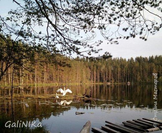 Сентябрь! Пора за грибами в лес идти!  Вырос беленький красавец около дорожки, на радость тому, кто мимо идёт и его заметит...  Заметила я, и скорее фотографирую!  фото 38