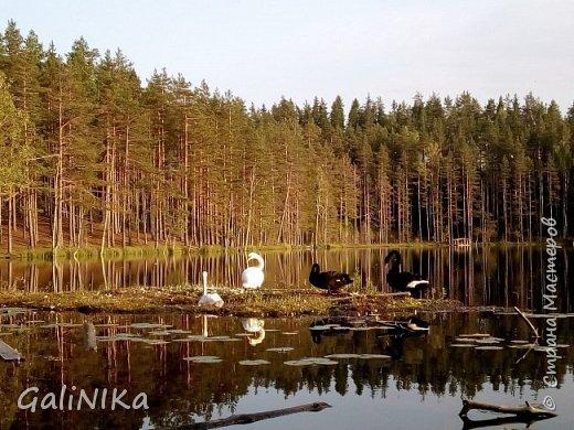 Сентябрь! Пора за грибами в лес идти!  Вырос беленький красавец около дорожки, на радость тому, кто мимо идёт и его заметит...  Заметила я, и скорее фотографирую!  фото 39