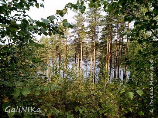 Сентябрь! Пора за грибами в лес идти!  Вырос беленький красавец около дорожки, на радость тому, кто мимо идёт и его заметит...  Заметила я, и скорее фотографирую!  фото 36