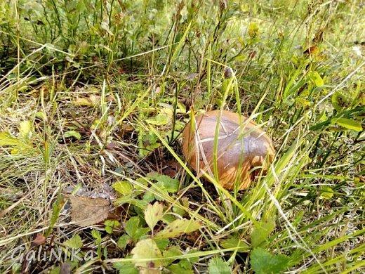 Сентябрь! Пора за грибами в лес идти!  Вырос беленький красавец около дорожки, на радость тому, кто мимо идёт и его заметит...  Заметила я, и скорее фотографирую!  фото 35