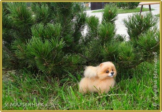 СОФИ. Собачка и шерсти фото 3
