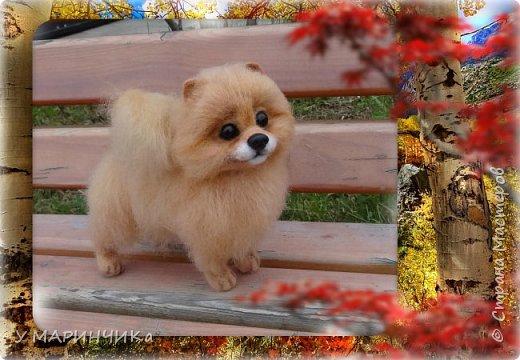 СОФИ. Собачка и шерсти фото 1