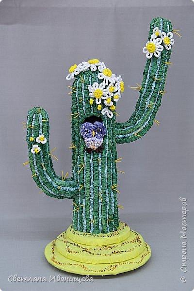 Вы знаете кто такие сычики – эльфы? Это крошечные совы живущие в Мексике и в засушливых пустынях Соединенных Штатов Америки. Североамериканские пустыни – это пески, нагромождение камней, редкие сухие кустарники и торчащие среди них кактусы сагуаро. Высота сагуаро до 15 метров, а в обхвате они не уступают столетнему дубу. В одеревеневших стволах гигантских кактусов выдалбливают дупла пустынные дятлы. Вот в таких опустевших дуплах и селятся сычики – эльфы. Днем сычик спит в дупле, а ночью вылетает ловить насекомых. фото 1
