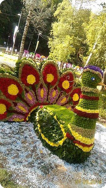 Восьмой международный фестиваль садов и цветов «Город-Сад» прошел в Воронеже с 30 августа по 2 сентября.Мы приехали в парк после первосентябрёвских линеек.  фото 16