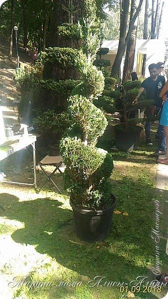Восьмой международный фестиваль садов и цветов «Город-Сад» прошел в Воронеже с 30 августа по 2 сентября.Мы приехали в парк после первосентябрёвских линеек.  фото 28