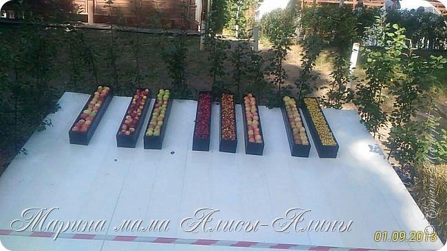 Восьмой международный фестиваль садов и цветов «Город-Сад» прошел в Воронеже с 30 августа по 2 сентября.Мы приехали в парк после первосентябрёвских линеек.  фото 53