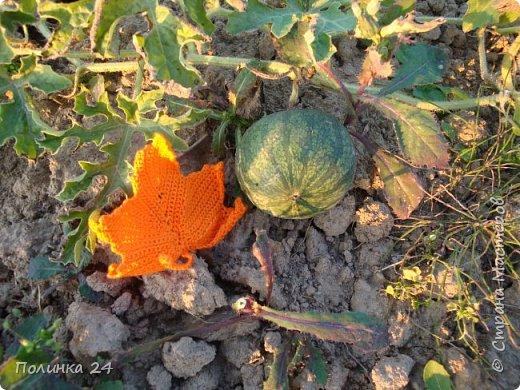 Все  фотографии  на  нашем  огороде.  Последний  солнечный  денёк. фото 4