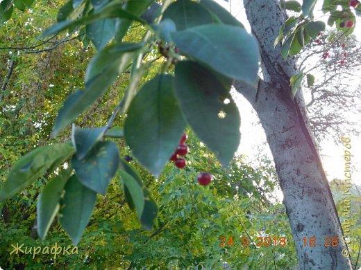 Для дырчатых листьев тоже есть прототип. фото 13