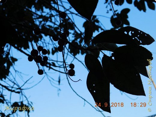 Для дырчатых листьев тоже есть прототип. фото 14
