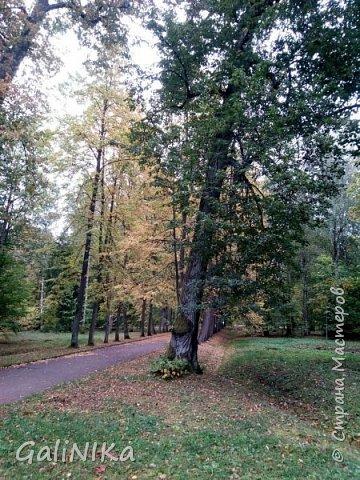 Доброго времени суток, друзья!   Сентябрь в этом году такой по-летнему тёплый, что я бываю на природе больше, чем дома.     В субботу решила съездить в город Ломоносов, расположенный на южном берегу Финского залива в 40 километрах от Санкт-Петербурга (до 1948 года название города Ораниенбаум).  Целью моей поездки была прогулка по дорожкам знаменитого дворцово-паркового ансамбля Ораниенбаум.  А, что ещё в хорошую сентябрьскую погоду делать, если не смотреть на начало золотой осени! Но погода ….   фото 18