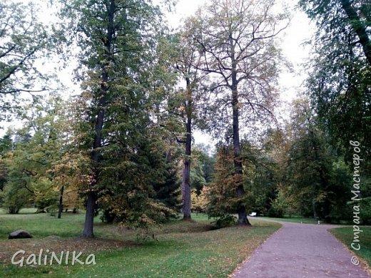 Доброго времени суток, друзья!   Сентябрь в этом году такой по-летнему тёплый, что я бываю на природе больше, чем дома.     В субботу решила съездить в город Ломоносов, расположенный на южном берегу Финского залива в 40 километрах от Санкт-Петербурга (до 1948 года название города Ораниенбаум).  Целью моей поездки была прогулка по дорожкам знаменитого дворцово-паркового ансамбля Ораниенбаум.  А, что ещё в хорошую сентябрьскую погоду делать, если не смотреть на начало золотой осени! Но погода ….   фото 25