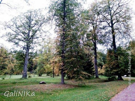Доброго времени суток, друзья!   Сентябрь в этом году такой по-летнему тёплый, что я бываю на природе больше, чем дома.     В субботу решила съездить в город Ломоносов, расположенный на южном берегу Финского залива в 40 километрах от Санкт-Петербурга (до 1948 года название города Ораниенбаум).  Целью моей поездки была прогулка по дорожкам знаменитого дворцово-паркового ансамбля Ораниенбаум.  А, что ещё в хорошую сентябрьскую погоду делать, если не смотреть на начало золотой осени! Но погода ….   фото 26