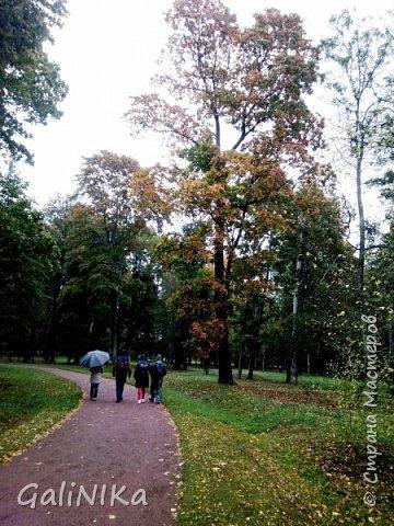 Доброго времени суток, друзья!   Сентябрь в этом году такой по-летнему тёплый, что я бываю на природе больше, чем дома.     В субботу решила съездить в город Ломоносов, расположенный на южном берегу Финского залива в 40 километрах от Санкт-Петербурга (до 1948 года название города Ораниенбаум).  Целью моей поездки была прогулка по дорожкам знаменитого дворцово-паркового ансамбля Ораниенбаум.  А, что ещё в хорошую сентябрьскую погоду делать, если не смотреть на начало золотой осени! Но погода ….   фото 32
