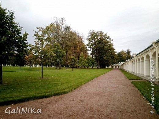 Доброго времени суток, друзья!   Сентябрь в этом году такой по-летнему тёплый, что я бываю на природе больше, чем дома.     В субботу решила съездить в город Ломоносов, расположенный на южном берегу Финского залива в 40 километрах от Санкт-Петербурга (до 1948 года название города Ораниенбаум).  Целью моей поездки была прогулка по дорожкам знаменитого дворцово-паркового ансамбля Ораниенбаум.  А, что ещё в хорошую сентябрьскую погоду делать, если не смотреть на начало золотой осени! Но погода ….   фото 51