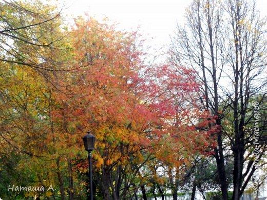 Опавшие листья и мой листок. фото 4
