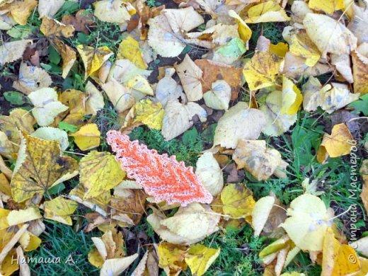 Опавшие листья и мой листок. фото 1