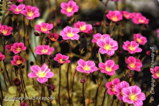 Мой сад.Мой Nikon. фото 4