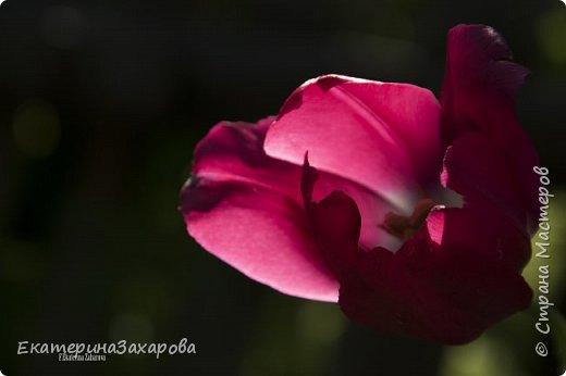 Мой сад.Мой Nikon. фото 9
